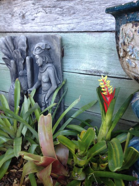 Beautiful gardens, 22 McAnally Drive Sunshine Beach