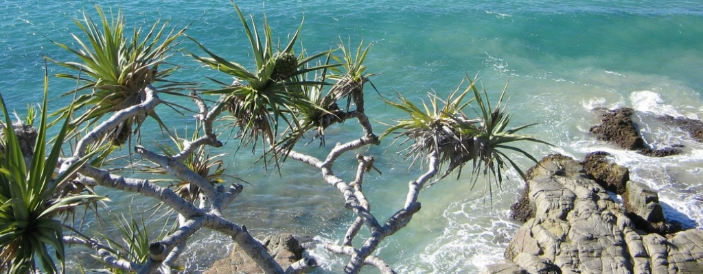 Explore Noosa National Park